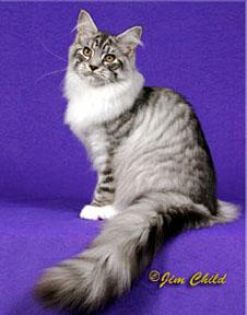 QGC/RW Heartshaven Benneton of Codycats