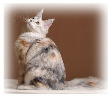 Website address: Shipping: Kittens or Retiree: Date of Birth: Retiree Sex ...